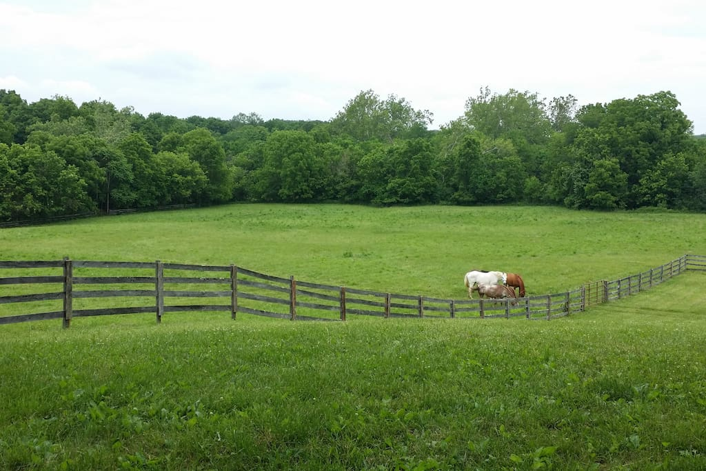 View from front porch of lower pasture