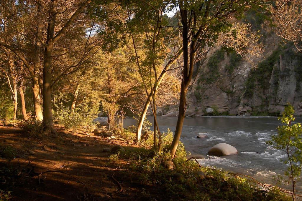 En el bosque a orillas de río