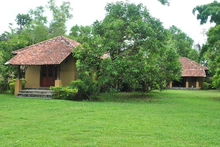 Villa 44 (Ruskin Island) - Panadura - Villa