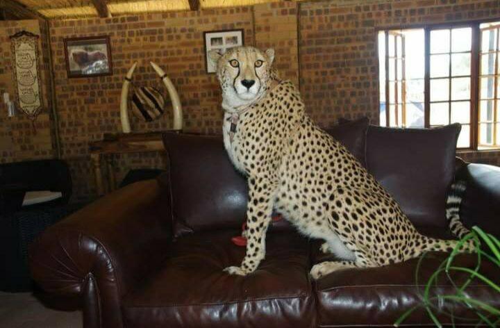 Unforgettable Bushveld Experience