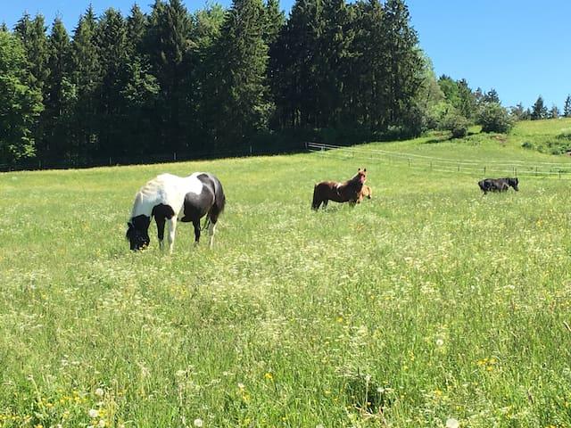 Schopfelenhof - Unterkunft nicht nur für Reiter