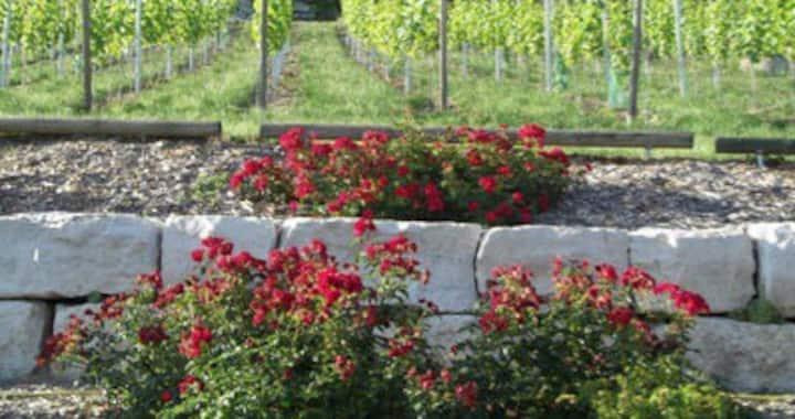 Pension in bezauberndem Weinort Bach b. Regensburg