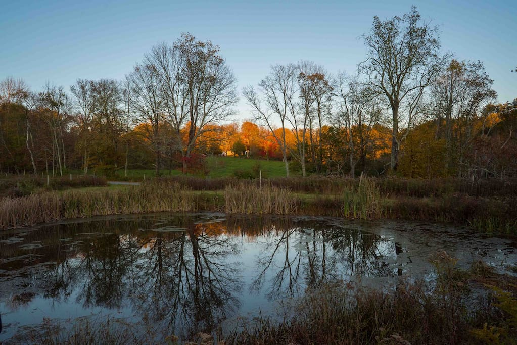 Pond around sunset