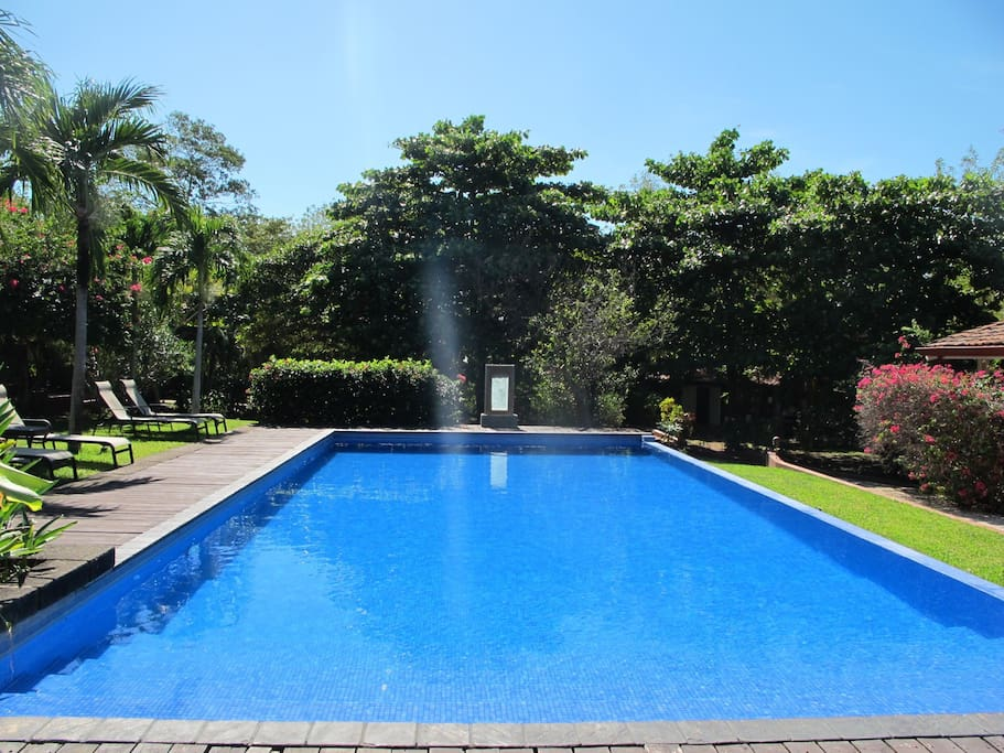 Casa mapache room view pool bed breakfasts for rent for Pool design costa rica