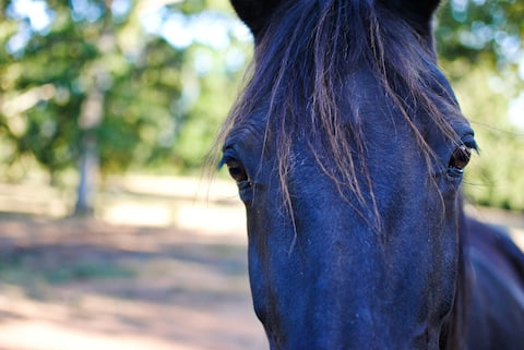 Equestrian's Paradise- Minutes Away from City Life