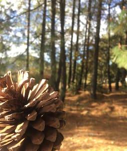 Cabaña Maple Amealco de Bonfil