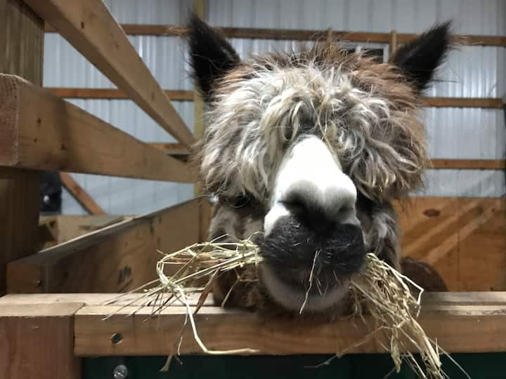 Green Meadows Alpaca Ranch (near KC, UCM  & WAFB)