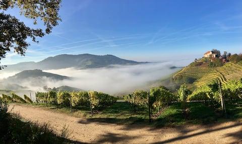Ferienwohnung - Goldener Weinort Durbach
