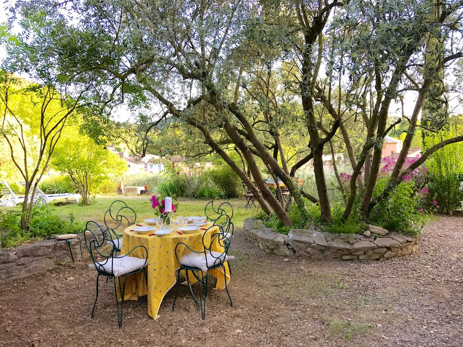 Table under the coolness of a magnificent olive tree