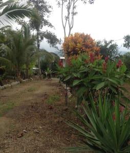Organic cocoa and fruit farm - Pasaje Canton