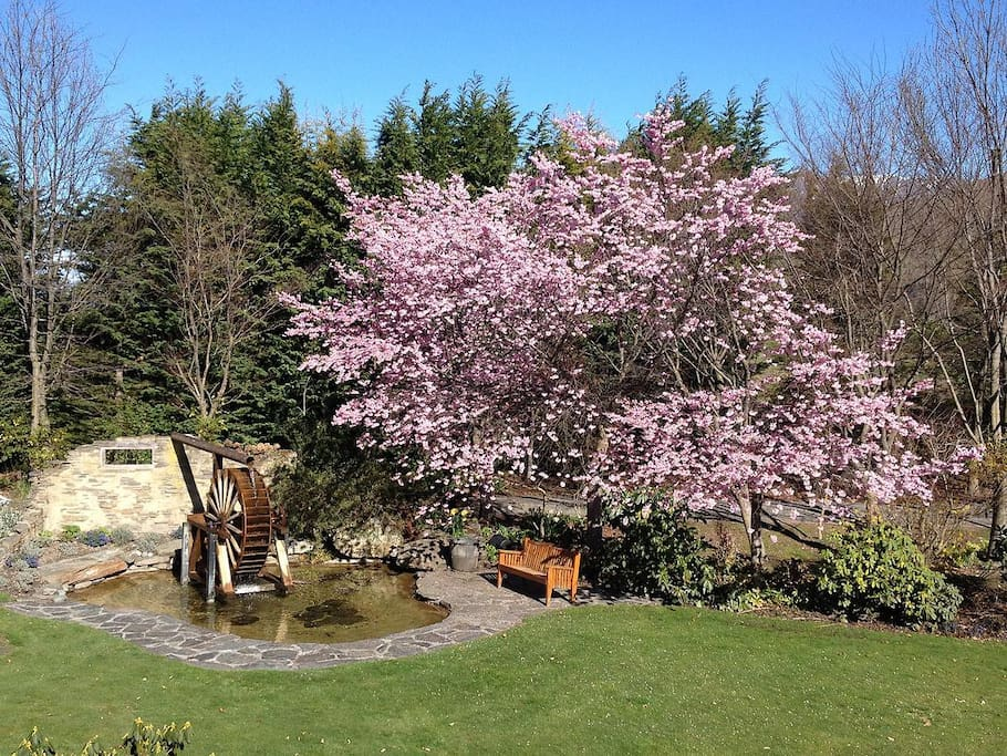 Spring cheery blossoms over the water wheel