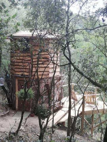 La cabane aux oiseaux