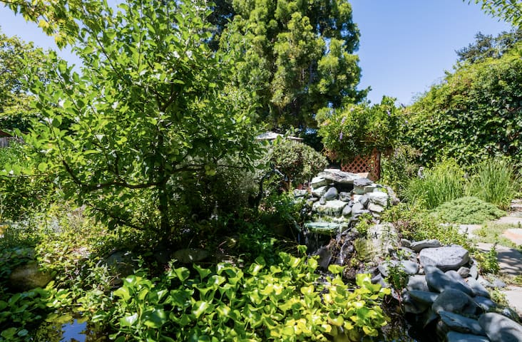 Fuji apple tree presides over the waterfall and goldfish pond filled with water hyacinths in the Zen-like back garden