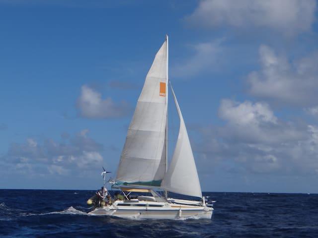 Cabine dans un catamaran au coeur de la marina