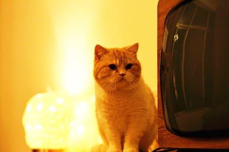 低调的奢华-猫咪饲养繁育主题别墅公寓-五星床品简约设计房型设有停车场-豪华家庭间 - 桂林 - Villa