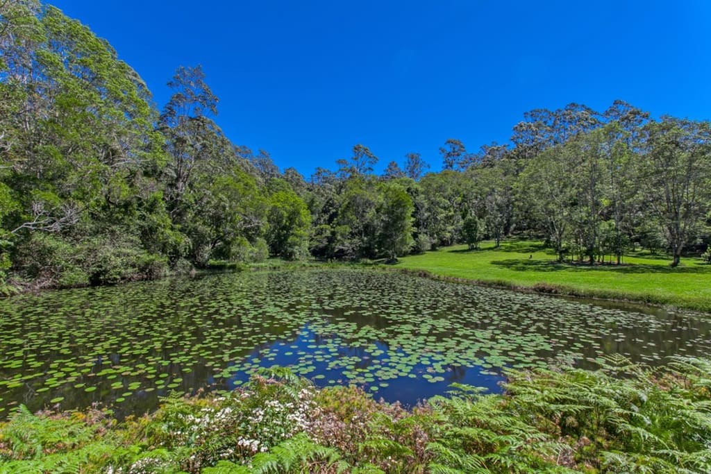 Enjoy a picnic at the stunning lilly ponds, only minutes from the cottage.