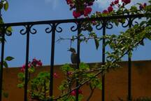 Maison Bougainvillea makes feel be part of Antigua Guatemala.