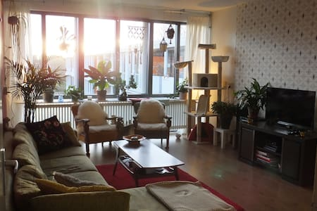 Spacious and cozy apartment with cats Hitch & June