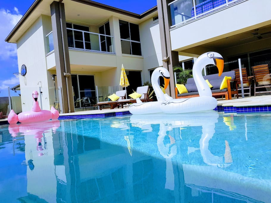Come and swim with our Flamingos.
