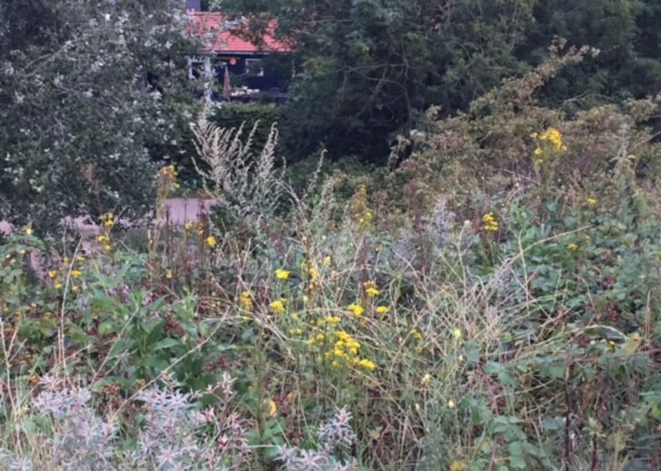 Vanaf het duin bekeken: het huisje ligt verscholen...