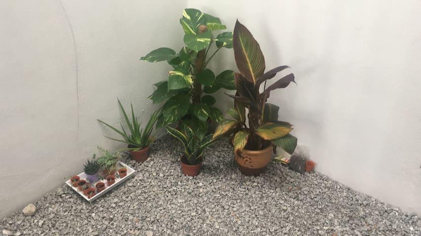 small in house garden