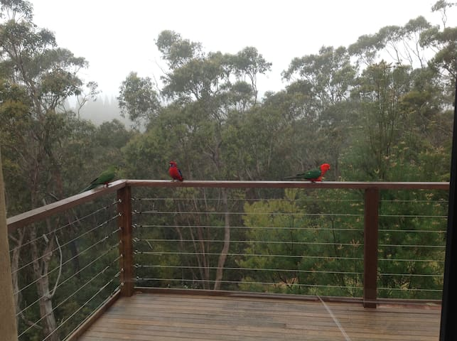 Back deck with visiting King Parrots
