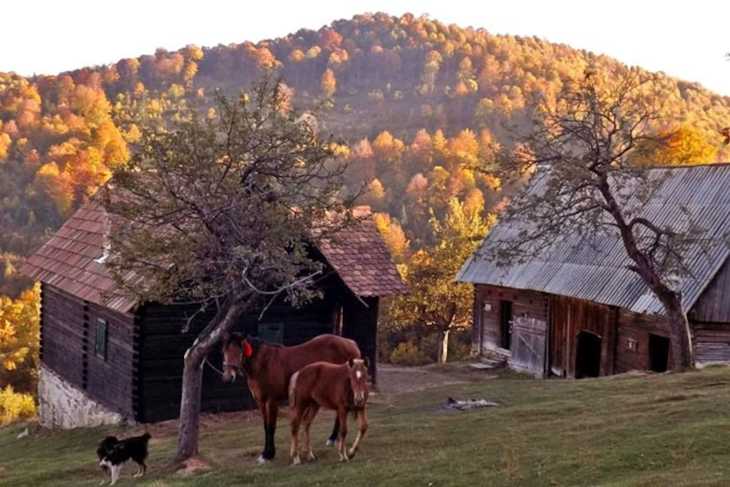 Cozo Fantu •  shepherd hut in the transylvania carpathian mountains