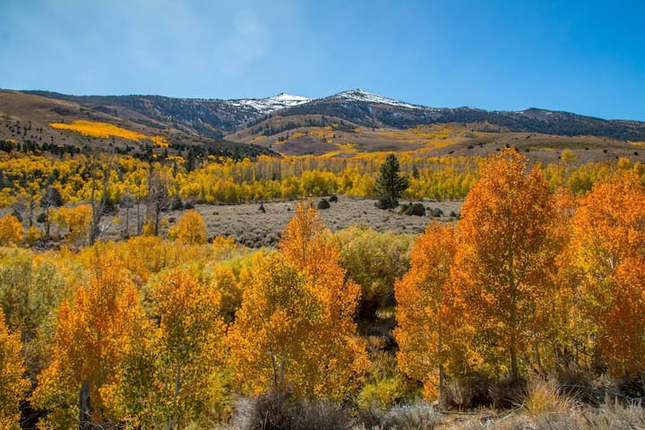 Come to see Sierra fall colors! October views along Summers Meadow Road.