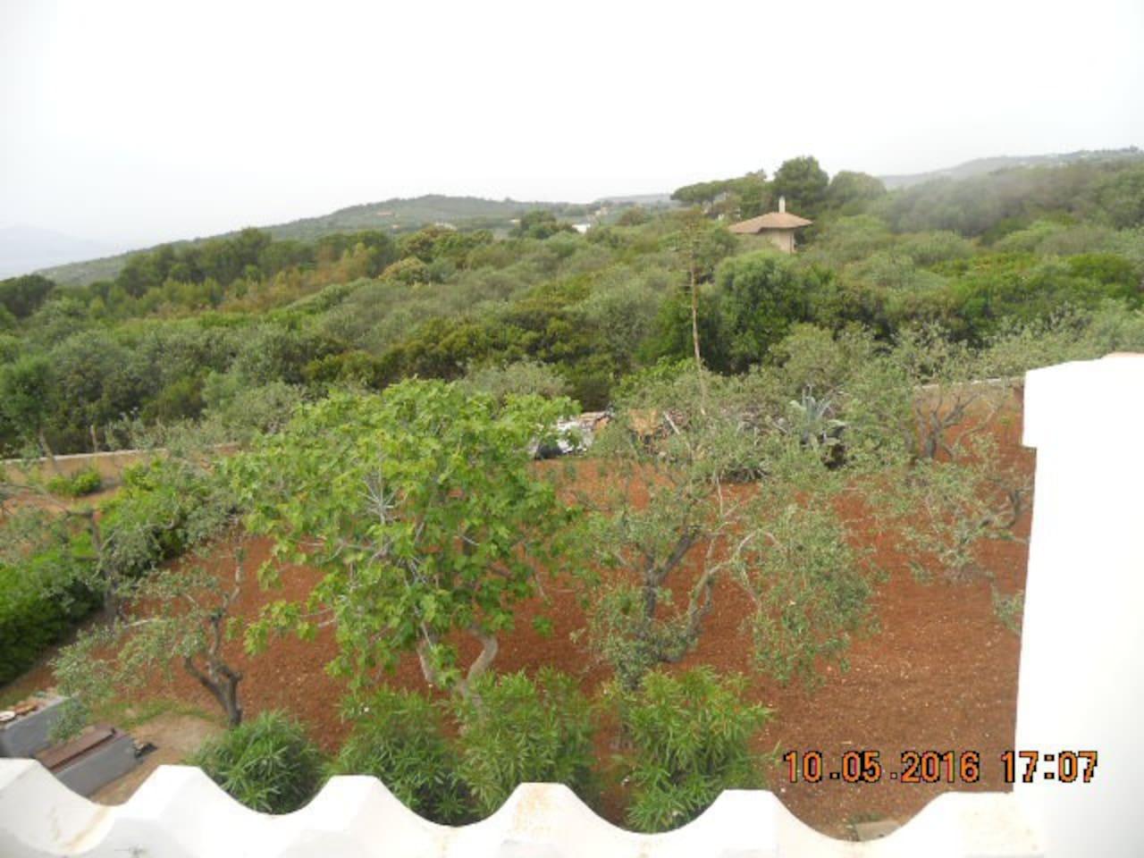vista panoramica sul verde circostante