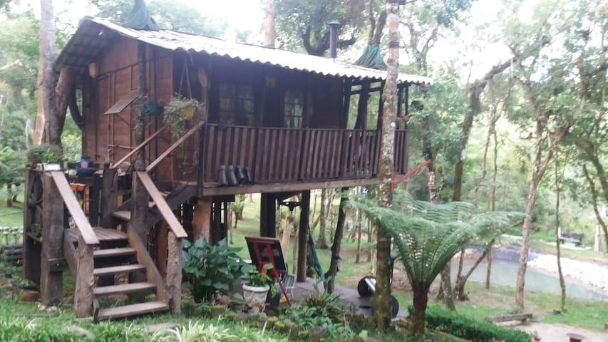 Casa na árvore, um dia de sonho!