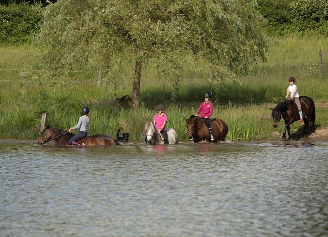 En été, faites l'expérience unique de la baignade avec les chevaux !
