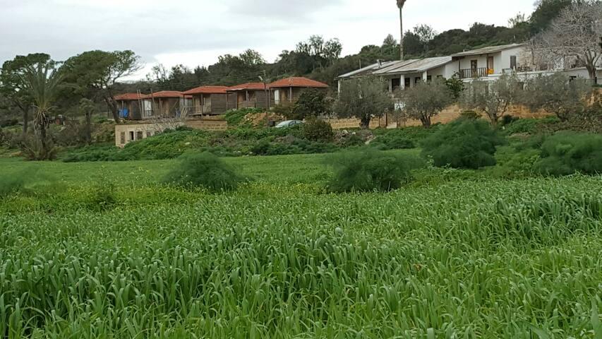 Rizokarpaso farm house