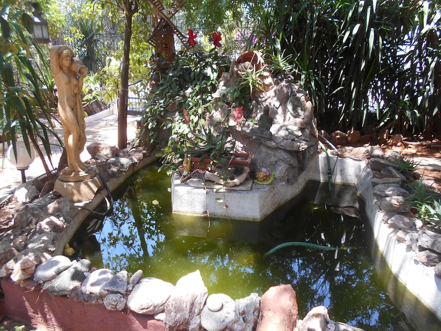 the pond with the fishes