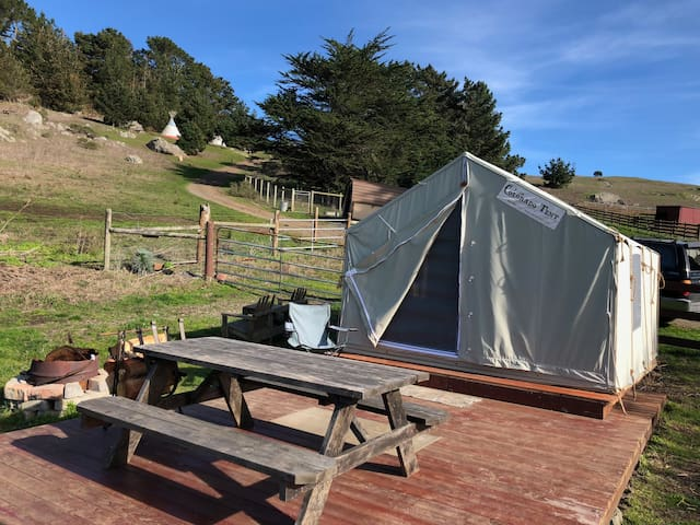 Tree Frog Glamping Tent