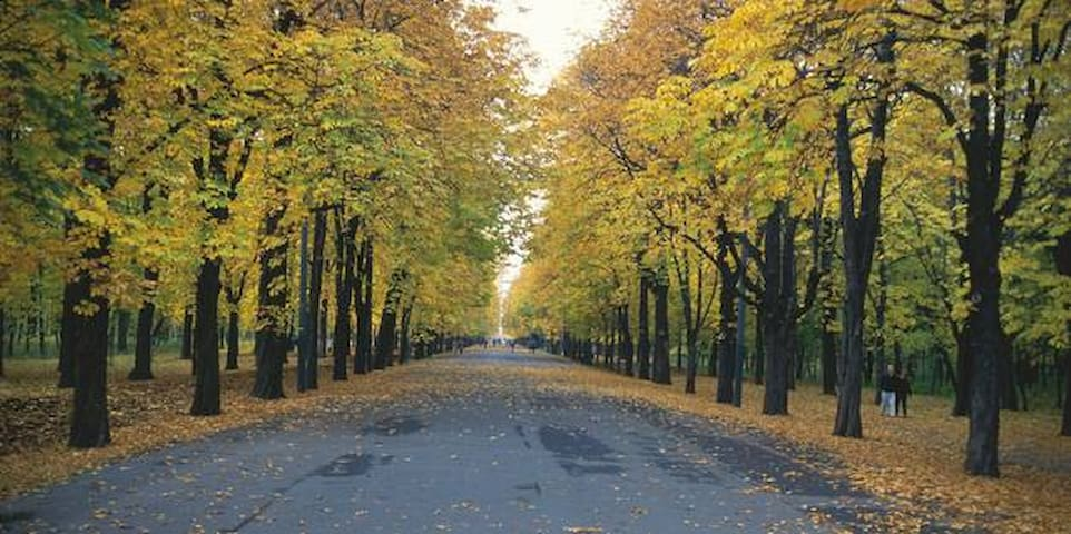 Prater- also in the 2 nd district- perfect for running and walking