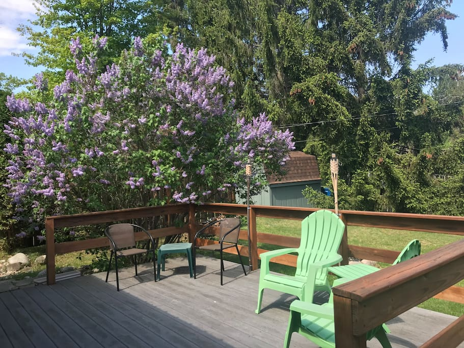Large deck and our lilac in all its glory