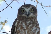 May & June Owls often stay at farm too. This one we called Owen.