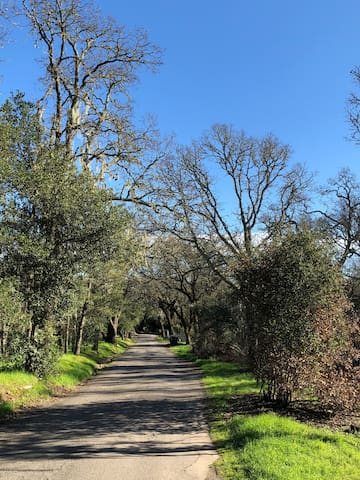 Sonoma country road
