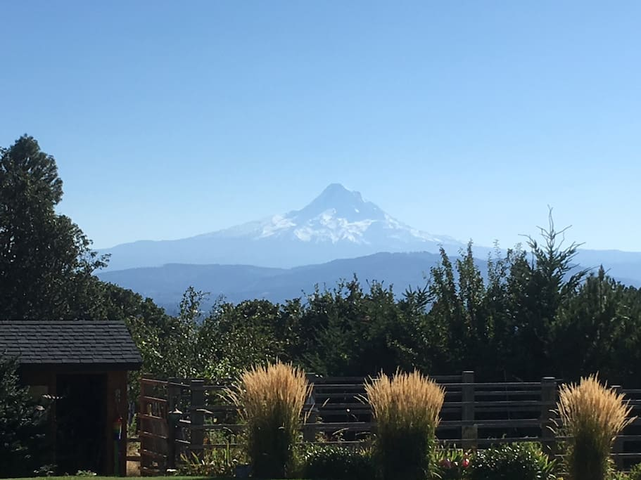 Mt Hood view from the lawn.