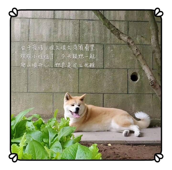 丽江古城-五一街-优选欧式大床房-精品卫浴--旅游攻略-萌宠秋田犬卢卡库