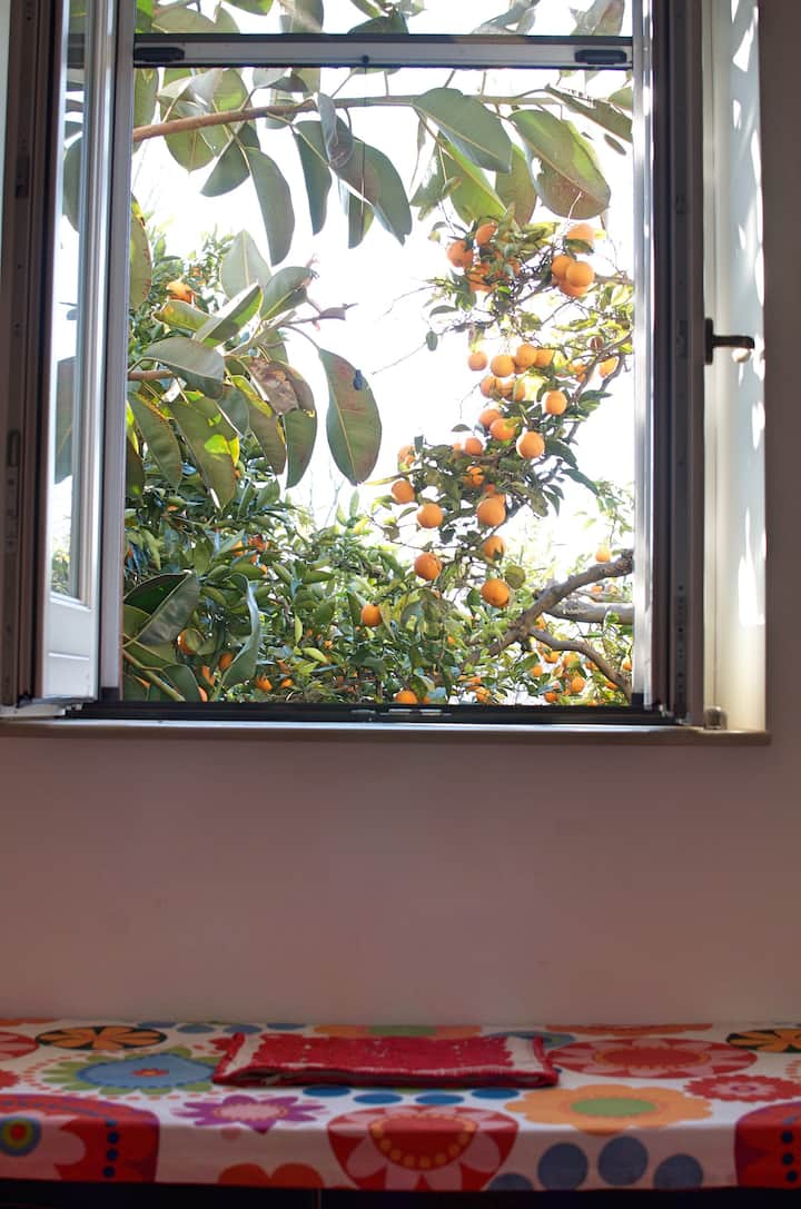 Appartamento Alloro nel Giardino del sole