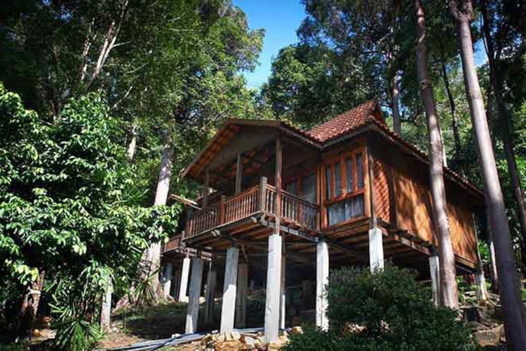 Rainforest Chalet Exterior View