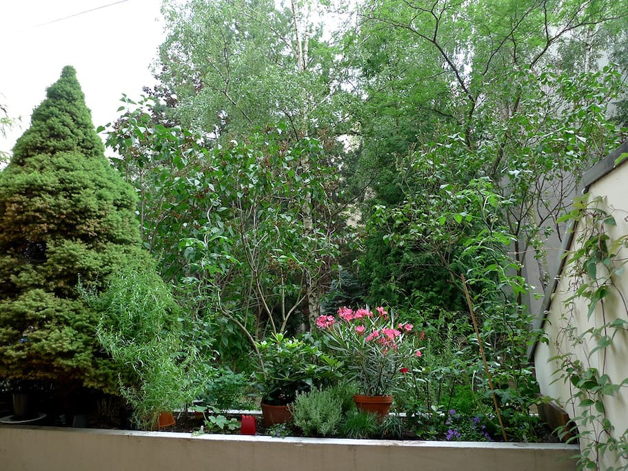 view from balcony into the backyard