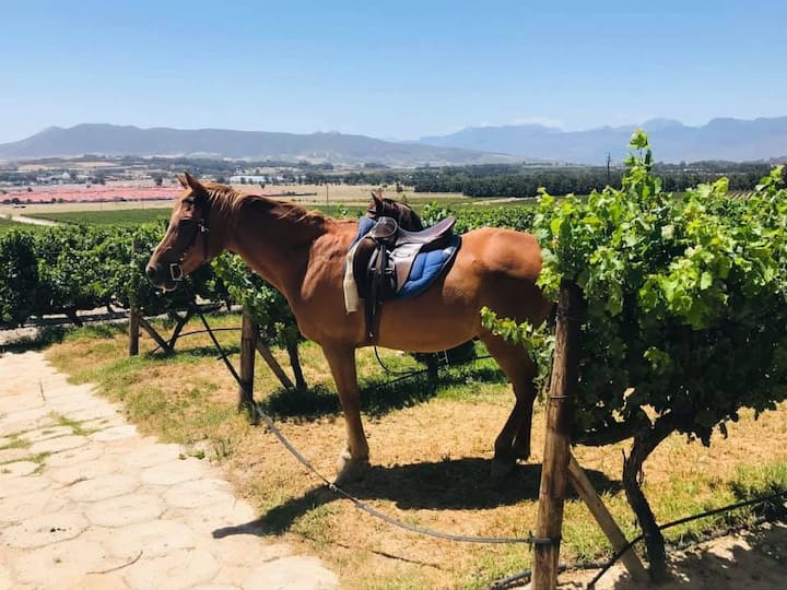 Our steeds wating for us to have wine.