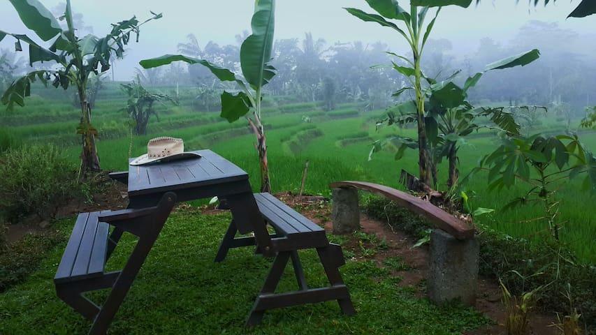 Amazing view, rice fields, nature