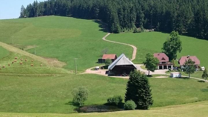 Oberengenbachhof, (Eisenbach), Wiesenblick, 35 qm, 1 Wohn-/Schlafzimmer, max. 2 Personen