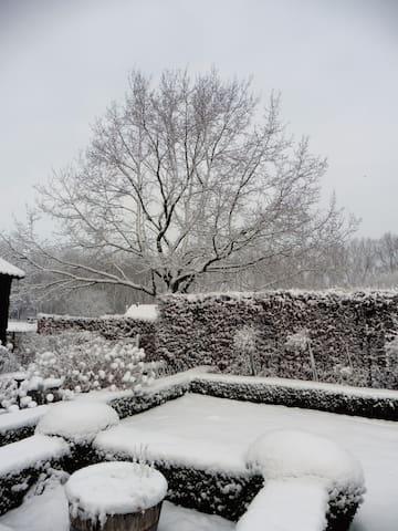 De tuin en de eik met een sneeuwlaag