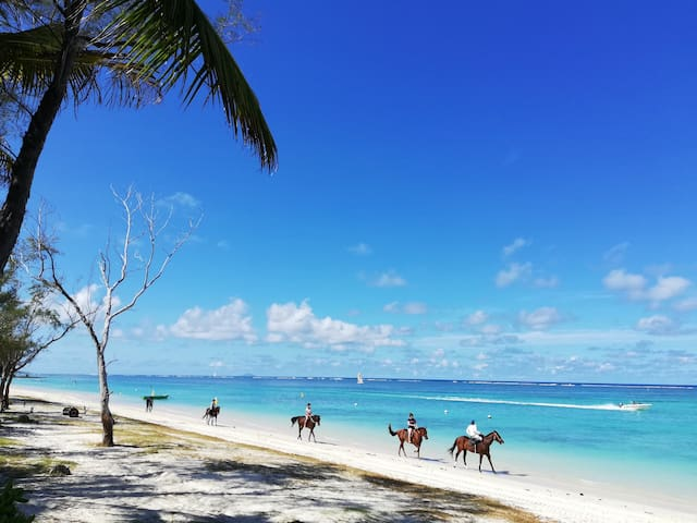 An amazing and unique horse riding experience on the endless sandy beach