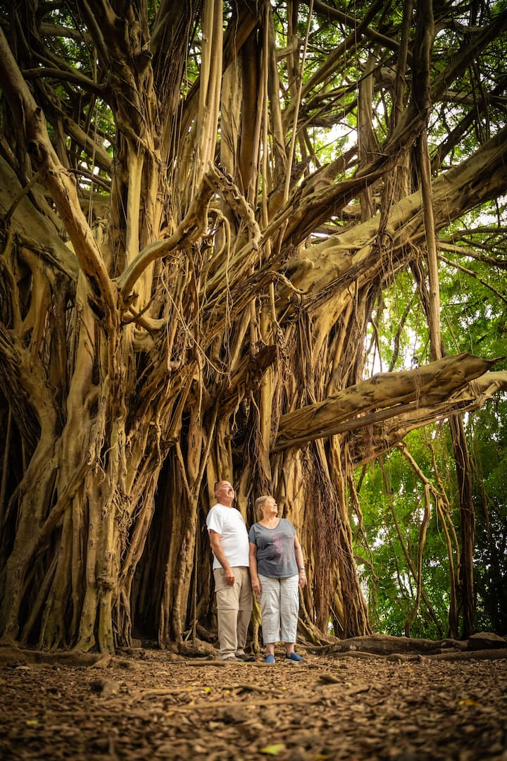 Massive Banyan Tree