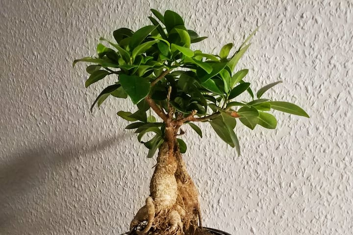 Little Bonsai (5min to downtown)